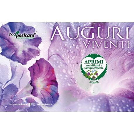 Eco-Postcard cartolina Auguri Viventi con semi Ipomea