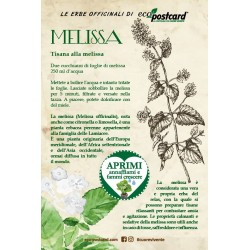 Eco-Postcard pianta officinale - Melissa