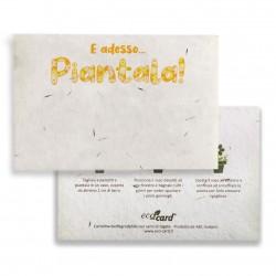 E ADESSO PIANTALA! cartolina biodegradabile piantabile al Tagete Eco-Card