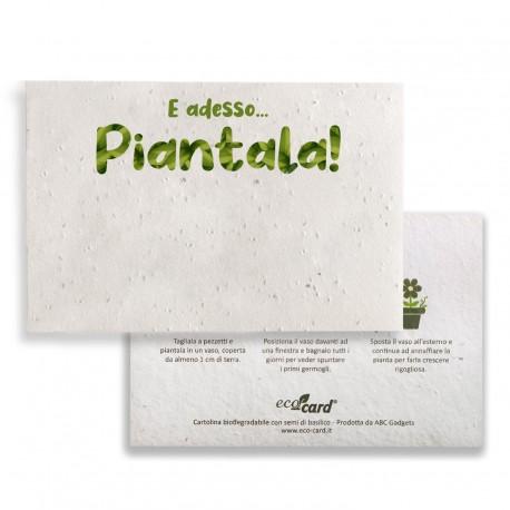 E ADESSO PIANTALA! cartolina biodegradabile piantabile al Basilico Eco-Card