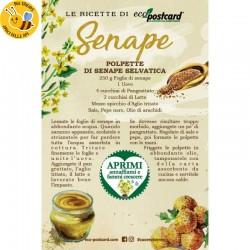 Eco-Postcard con ricetta polpette di senape selvatica