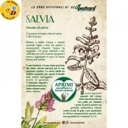 Eco-Postcard Pianta officinale - Salvia
