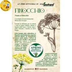 Eco-Postcard cartolina Pianta officinale Finocchio