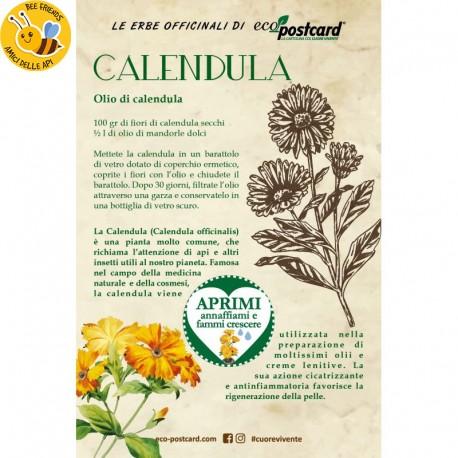 Eco-Postcard pianta officinale - Calendula