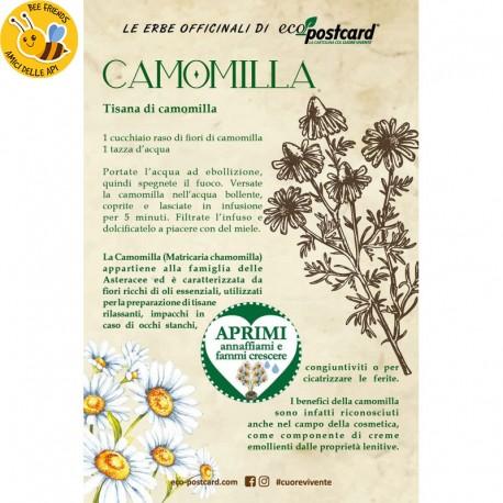 Eco-Postcard pianta officinale - Camomilla