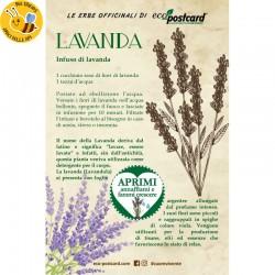 Eco-Postcard pianta officinale - Lavanda