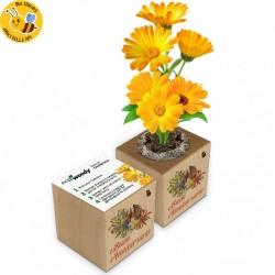 Eco-Woody - Buon Anniversario - Cubo di legno con semi di Calendula