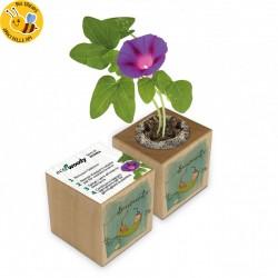 Eco-Woody - Regalo nascita bambino - Cubo con semi di Campanella Rampicante