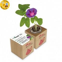 Eco-Woody - Regalo nascita bambina - Cubo con semi di Campanella Rampicante