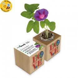 Eco-Woody LOVE - Regalo innamorati - Cubo con semi di Campanella Rampicante