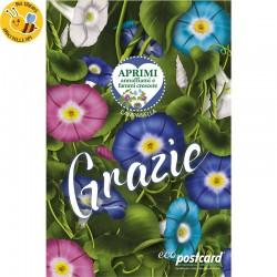 Biglietto Cartolina di Ringraziamento Ecologica con pianta di Morning Glory