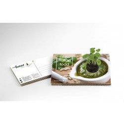 Eco-Postcard cartolina Italian Food Lovers pesto | Con piantina