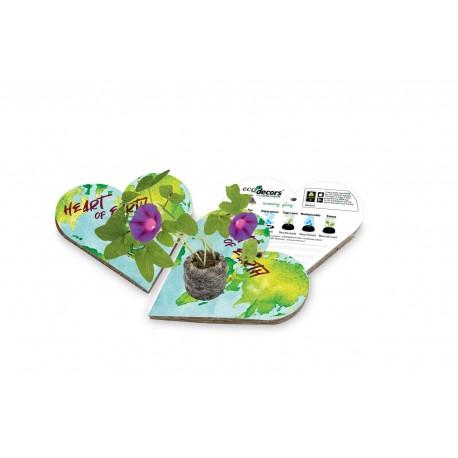 Eco-Decors decorazione ecologica mandala da colorare, con semi di ipomea