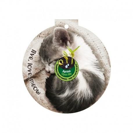 Eco-Decors decorazione ecologica per gatti, con semi di erba gatta