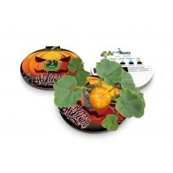 Eco-Decors decorazione ecologica halloween, con semi di zucchetta ornamentale