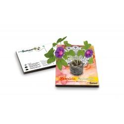 Eco-Postcard colorabile mandala arancio - ipomea