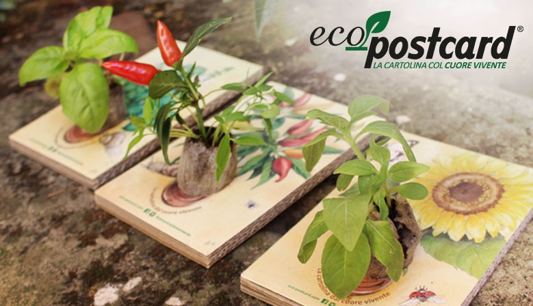 Eco Postcards